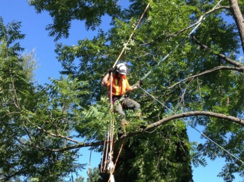 msr-tree-removal-in-lake-elsinore-ca
