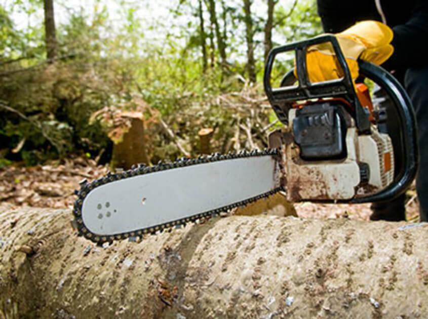 msr-tree-service-tree-removal-in-orange-county-ca