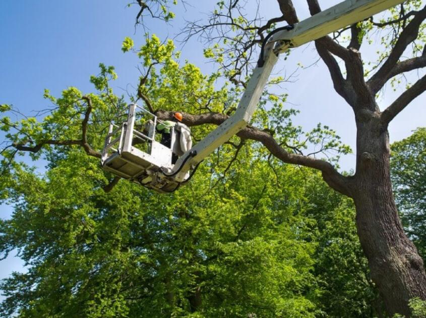 outdoor-landscape-tree-service-in-santa-ana-ca