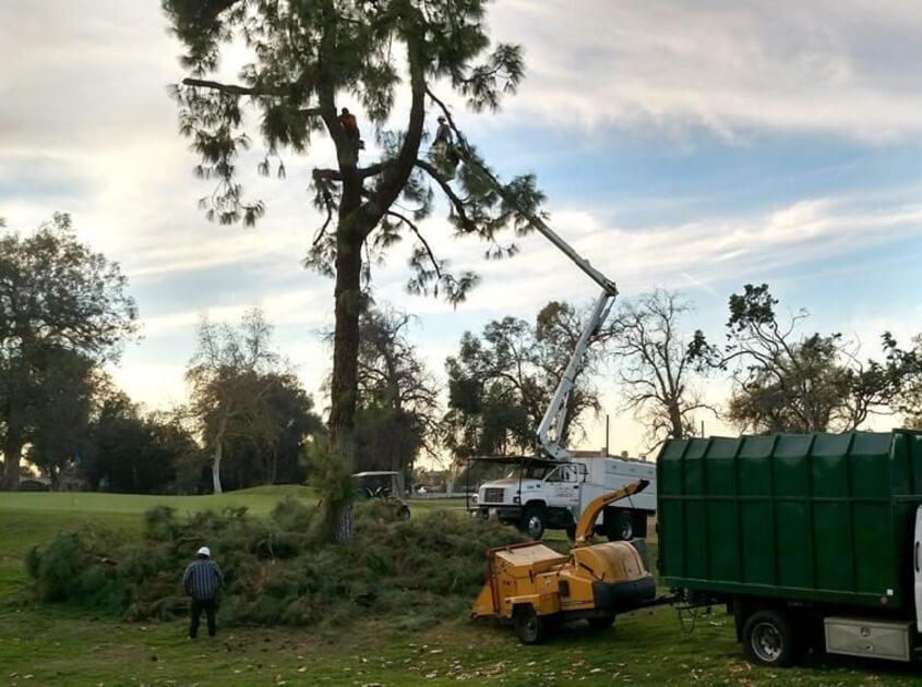 outdoor-landscape-tree-service-lawn-in-moreno-valley-ca