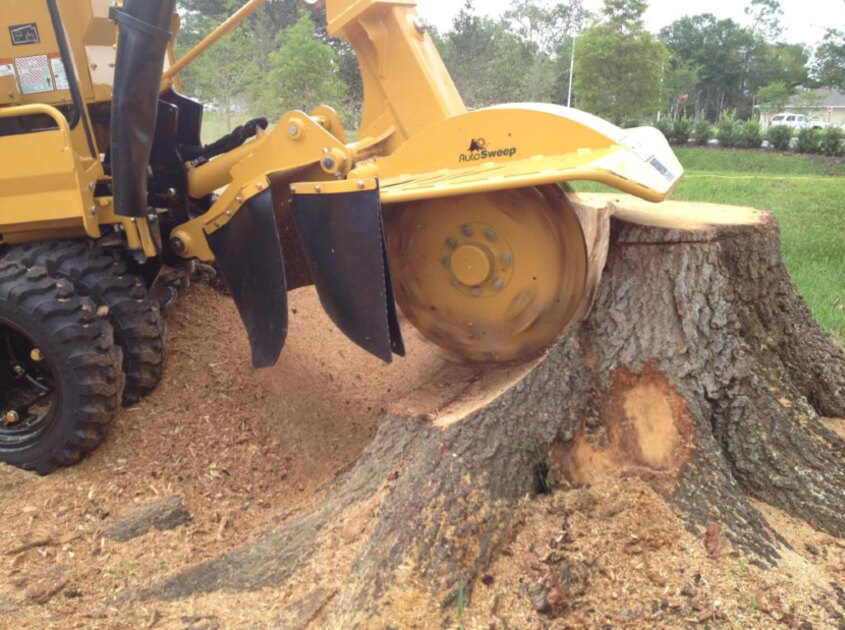 outdoor-stump-removal-landscape-lights-santa-ana-ca